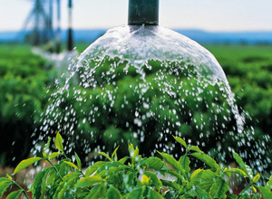 Projeto combate a escassez de água na agricultura familiar