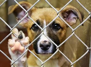 Praticar ato de abuso, maus-tratos, ferir ou mutilar animais é crime