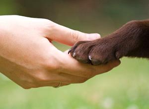 Projeto propõe medidas para o bem-estar dos animais