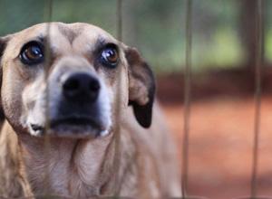 Agressores serão proibidos de obter a guarda do animal agredido ou mesmo de outros animais