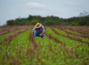 Medida Provisória nº 793 institui o Programa de Regularização Rural