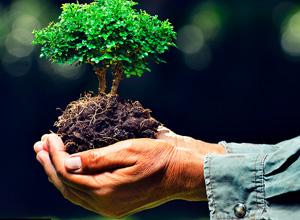 DOU publica decreto que converte multa ambiental em prestação de serviços