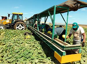 Empresas agrícolas pagam dano moral por condições precárias de ambiente