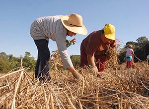 Requisitos, possibilidades e impedimentos da aposentadoria do trabalhador rural