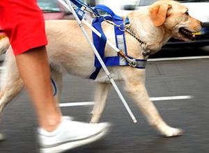 Recusa em transportar cão-guia de deficiente visual gera danos morais