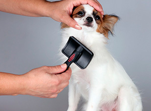 Pet shop pagará indenização por morte de cachorro
