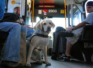 Animais domésticos poderão ser transportados em ônibus e trens
