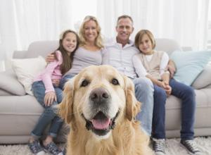 Latidos incessantes de cães obrigam donos a indenizar vizinha
