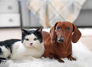 Convenção de condomínio não pode proibir genericamente a presença de animais