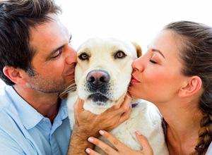 Casal separado precisa manter guarda compartilhada de cadela