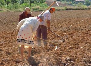 INSS deve reconhecer tempo de serviço rural na infância