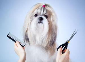 Pet shop condenada por problemas em banho e tosa de cachorro