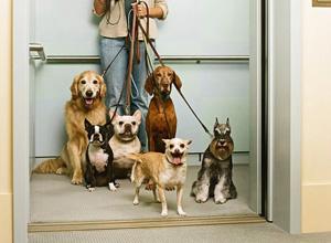 Condomínio não pode proibir animal de estimação apenas por tamanho