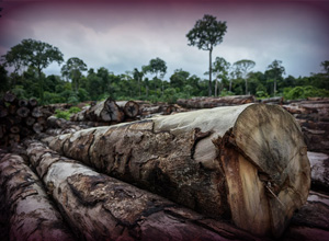 Confirmada multa de valor fixo por hectare desmatado em área de preservação ambiental